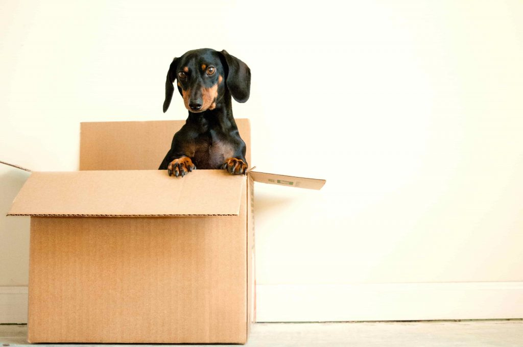 dog in a box 1024x680 - How To Move House On A Budget In Singapore