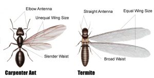Identifying Termites In Singapore 8 Signs Of Termite Infestation